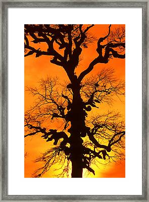 A Tree Is An Object Of Beauty Xii Framed Print