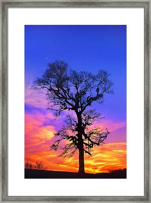 A Tree Is An Object Of Beauty Xiv Framed Print