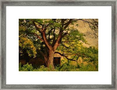 A Tree Framed Print by Jenny Rainbow
