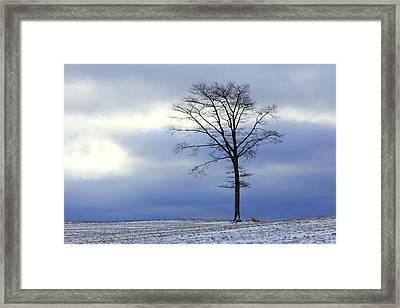 A Tree On A Field Of Snow Framed Print