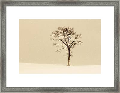 A Tree On A Hill In A Snow Storm Framed Print