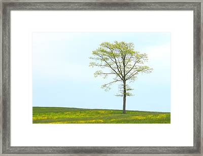 A Tree On A Hill Of Wildflowers Framed Print