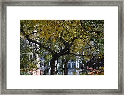 A Tree On Fifth Avenue Framed Print