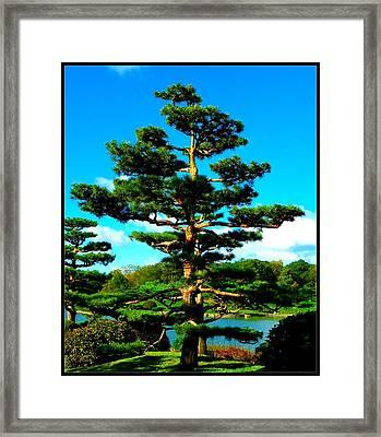 A Tree... Framed Print by Tim Fillingim