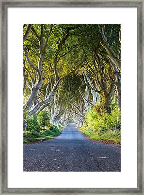 A Treelined Road In Ballymoney, County Framed Print