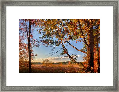 A Trees View Of Autumn On The Marsh Framed Print by Sylvia J Zarco