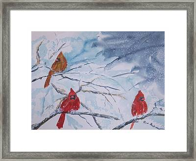 A Trio Of Cardinals Nestled In Snow Covered Branches Framed Print