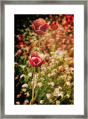 A Tulip's Daydream Framed Print by Loriental Photography
