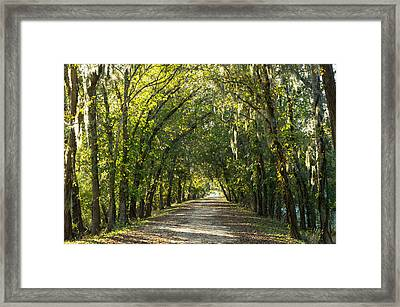 A Tunnel Of Trees Along Alligator Swamp Framed Print by Ellie Teramoto