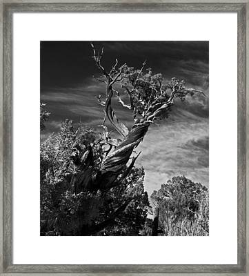 A Twisted Life  Framed Print