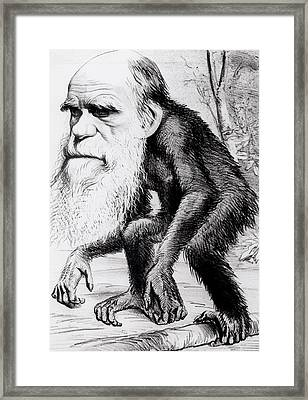 A Venerable Orang Outang Framed Print by English School