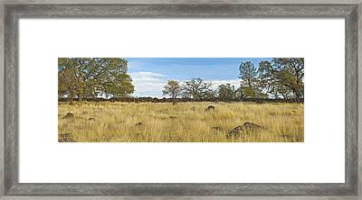 A Very Very Old Fence Framed Print by Charlie Osborn