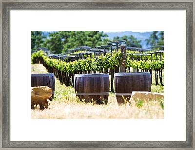 A Vineyard With Oak Barrels Framed Print by Susan Schmitz