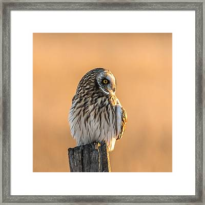 A Vision In Gold Framed Print by Yeates Photography