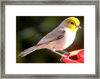A Visiting Chick Framed Print
