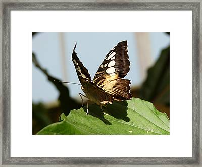 A Visitor Framed Print by Janina  Suuronen