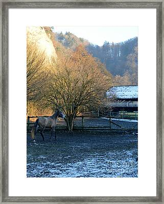 Framed Print featuring the photograph A Walk  by Felicia Tica