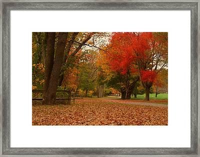 A Walk In Autumn - Holmdel Park Framed Print by Angie Tirado