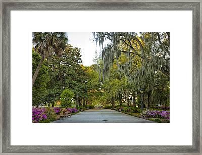 A Walk In Forsythe Park Framed Print by Diana Powell