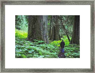 A Walk In The Ancient Forest Framed Print by Mary Lee Dereske