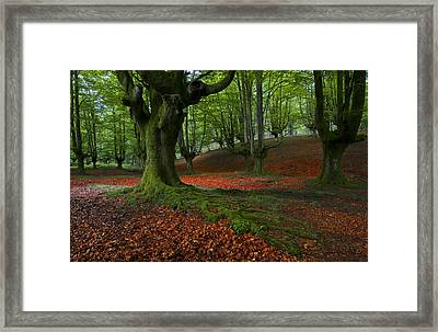 A Walk In The Forest Framed Print by Marilar Irastorza