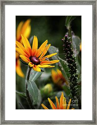A Walk In The Garden Framed Print by Sue Stefanowicz