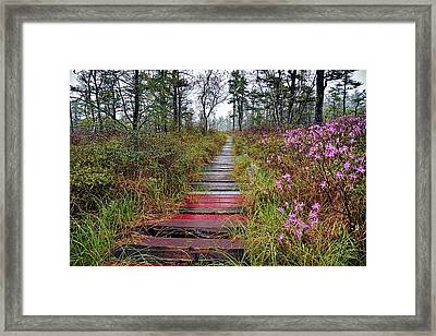 A Walk In The Heath Saco Maine Framed Print by Jeff Sinon