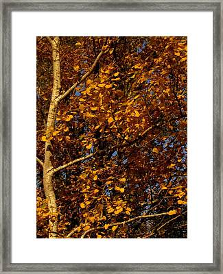 A Walk In The Park - Birch Framed Print by Bridget Johnson