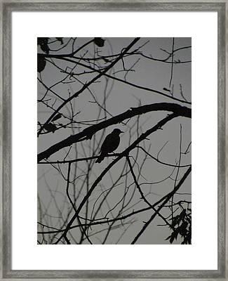 A Walk In The Park - Bird Framed Print by Bridget Johnson