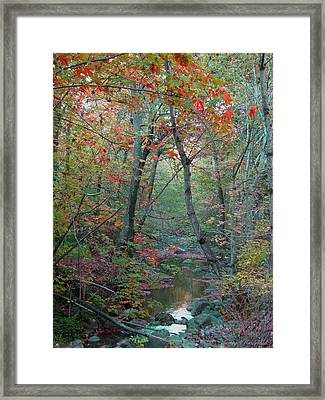 A Walk In The Park - Nature Photography  Framed Print