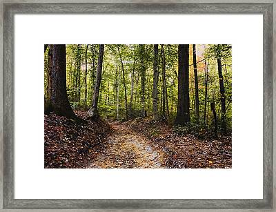 Framed Print featuring the photograph A Walk In The Park by Robert Culver