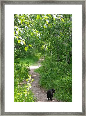 Framed Print featuring the photograph A Walk In The Park by Sheila Byers