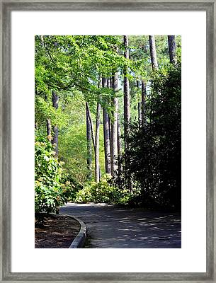 A Walk In The Shade Framed Print by Maria Urso