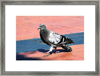 A Walk In The Square Framed Print