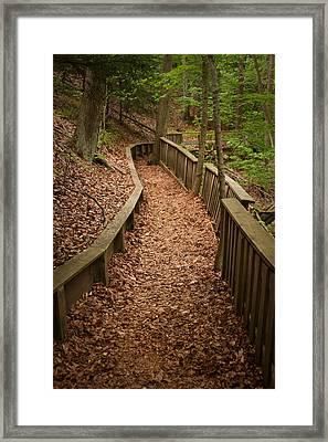 A Walk In The Woods Framed Print by Adam Romanowicz