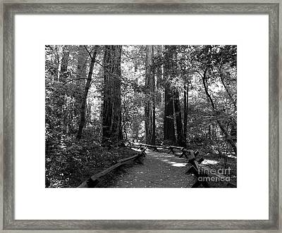 A Walk In The Woods Bw Framed Print