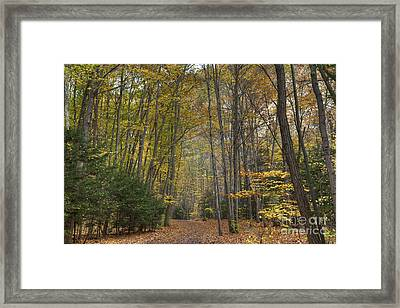 A Walk In The Woods II Framed Print by Michele Steffey