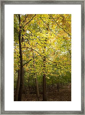 A Walk In The Woods Framed Print by Kathleen Scanlan