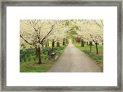 A Walk In Tower Grove Framed Print