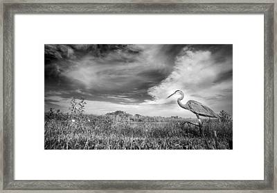 A Walk On The Wild Side Framed Print by Mark Andrew Thomas