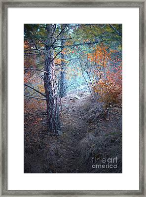 A Walk Through The Forest Framed Print by Tara Turner