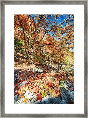 A Walk Through The Maple Trail Framed Print