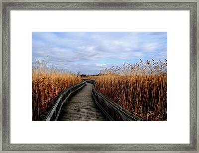 A Walk Through The Phragmites Framed Print