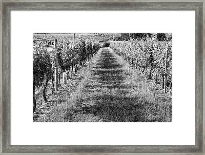 A Walk Through The Vineyard Framed Print