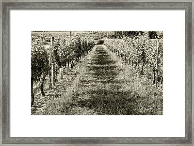 A Walk Through The Vineyard Toned Framed Print