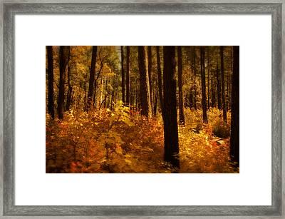 A Walk Through The Woods  Framed Print by Saija  Lehtonen