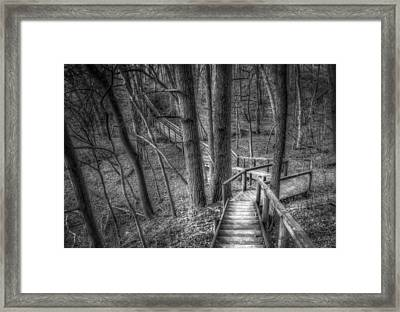 A Walk Through The Woods Framed Print by Scott Norris
