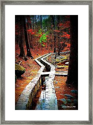 Framed Print featuring the photograph A Walk Through The Woods by Tara Potts