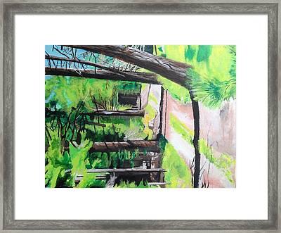 A Walk With Redwoods  Framed Print