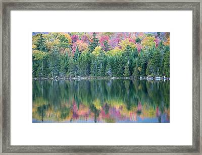 A Wall Of Evergreens Shield Colorful Framed Print by Robbie George